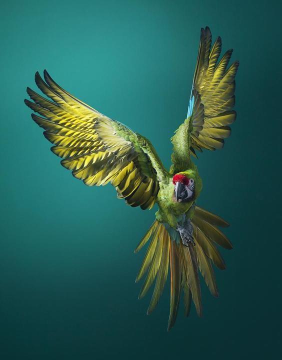 Photo of Preciosos retratos de animales en peligro de extinción que u…
