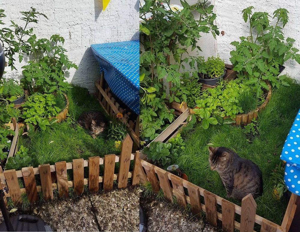 Gruener Katzenbalkon Katze Balkon Katzen Katzenhaltung
