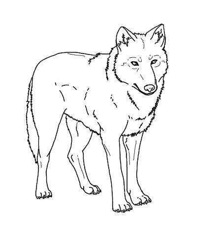 Realistic Wolf Coloring Pages To Print
