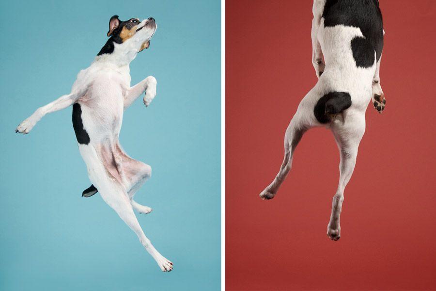 Action Animal Photography Dog Photography Dog Foto