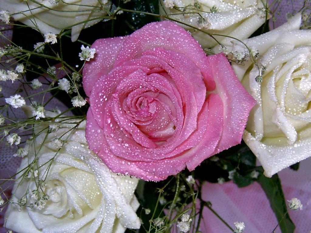 уточнить цены картинки роз по почте крест кругу