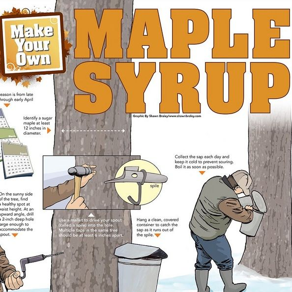 41aaeed4373 I want to try to make my own maple syrup someday!