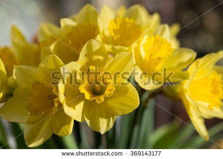 Gratis afbeelding op Pixabay - Narcissen, Bloemen, Gele