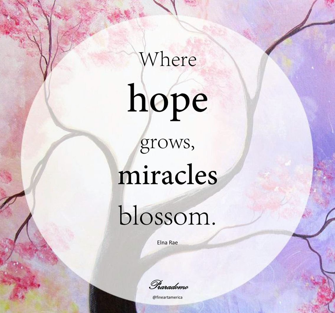 Where Hope Grows Miracles Blossom Blossom Miracles Affirmations