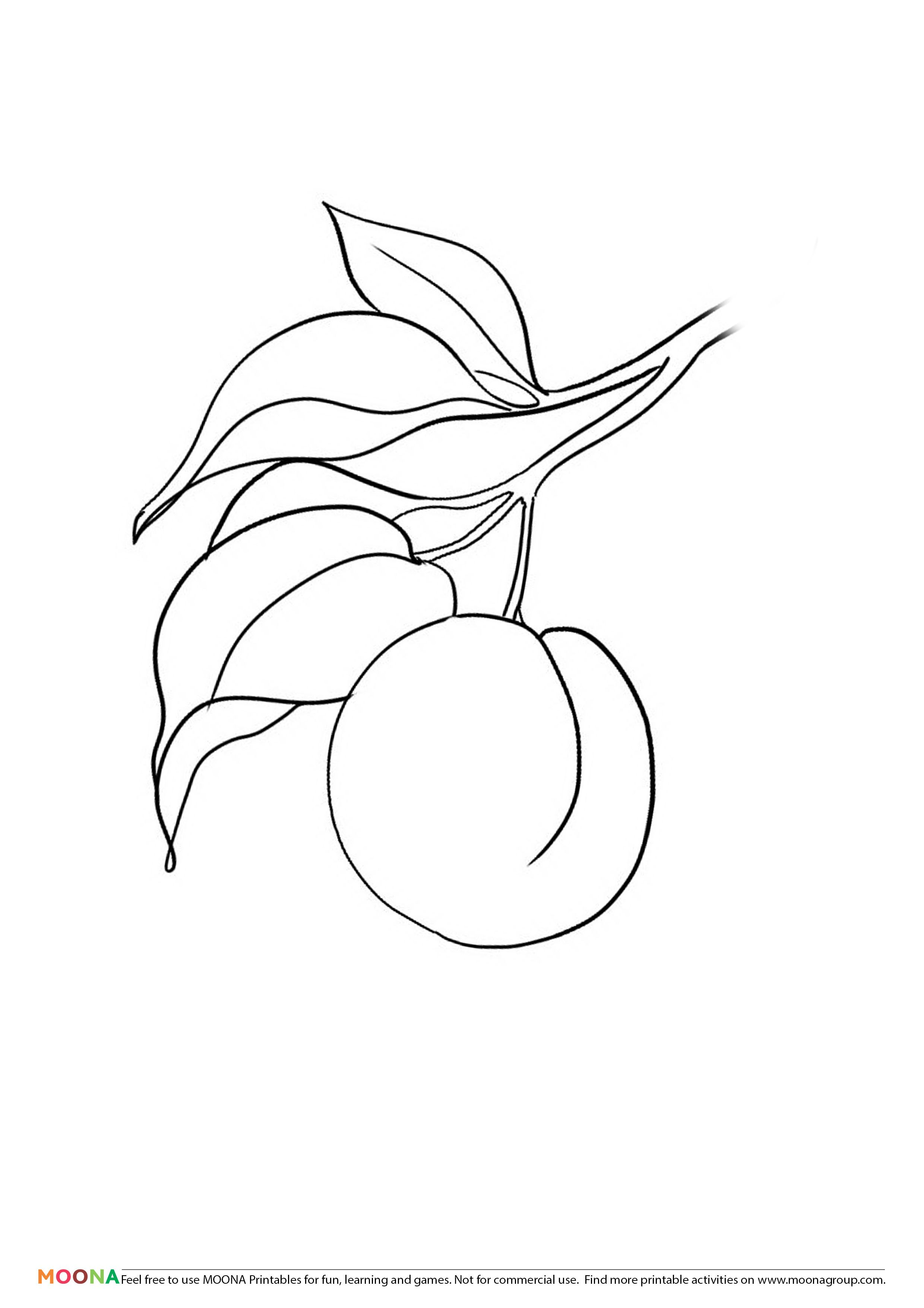 Free Printable Coloring Pages Moona Fruits And Berries Riscos