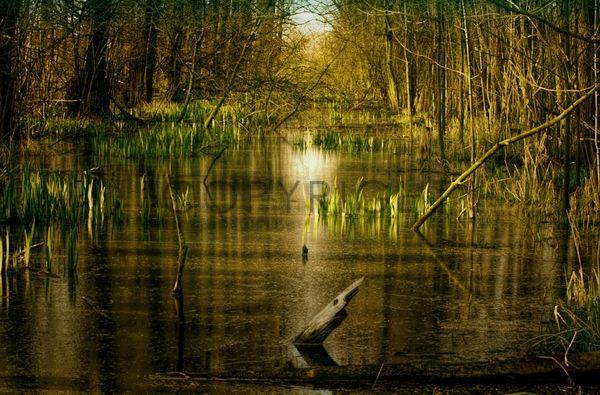 http://www.aviana.fineartprint.de  #Wasser #Natur #Naturbilder #grün #Wald #Homedecor #Bilder #Fotografie #photos #office #pflanzen #Frisches  10€ MUTTERTAGSGUTSCHEIN MUTTER2015 auf alle Produkte sichern gültig bis Sonntag 10. Mai 2015