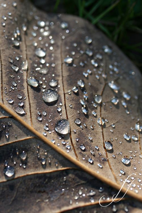 Drops on leaf - Pinned onto ★ #WebinfusionHome ★