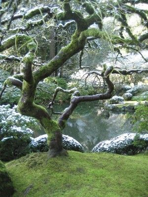 Japanese garden portland winter in the garden - Portland japanese garden admission ...