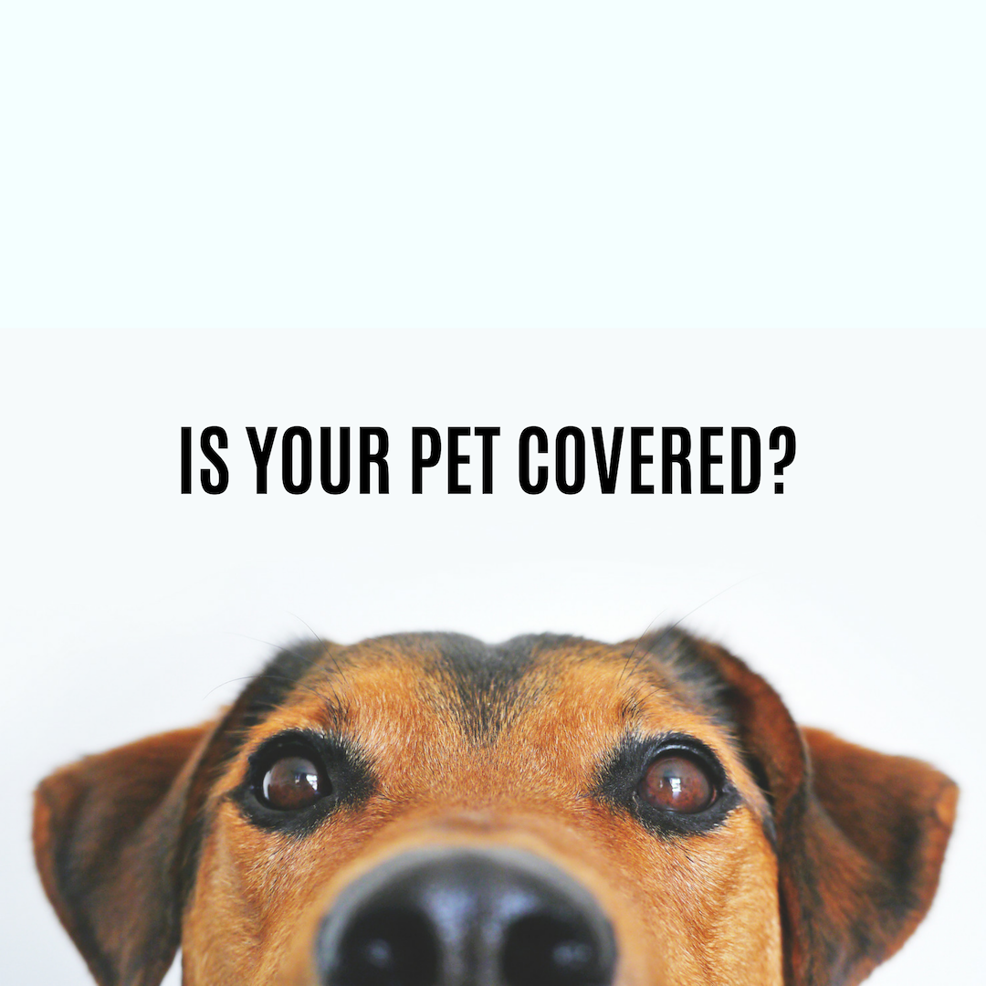 Get A Free Quote From Embrace Pet Insurance With Images Funny Dog Captions Embrace Pet Insurance Dogs