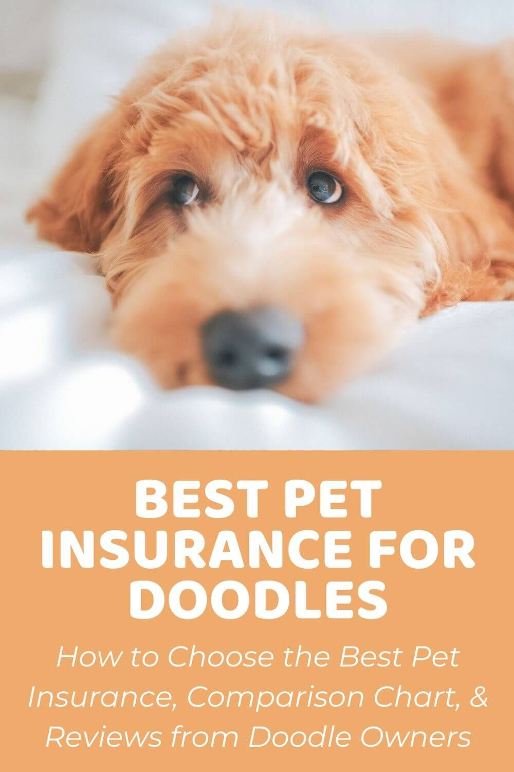 Best Pet Insurance Reviews For Dogs