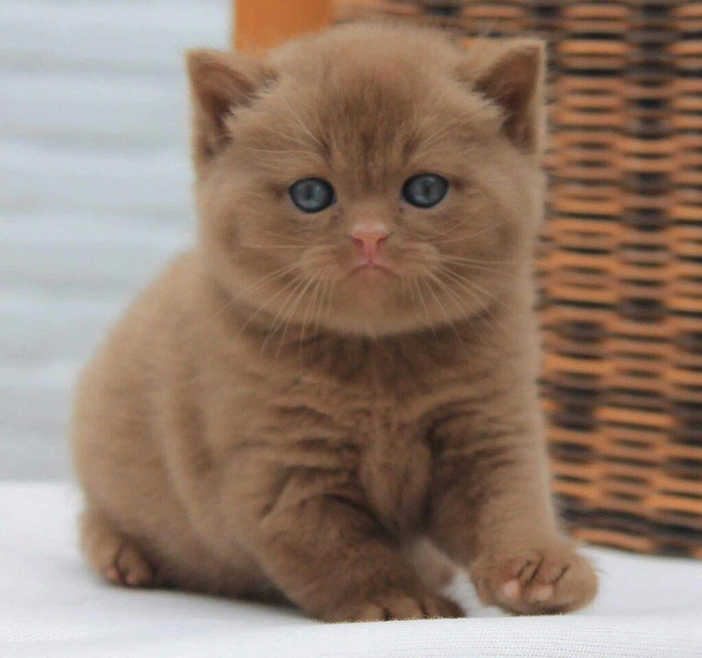Kittens Cutest Breeds Gattini Piccoli Cuccioli Di Animale Gattini