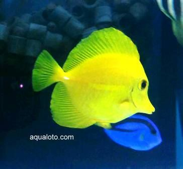 Peces marinos para acuarios acuarios marinos pinterest for Acuarios para peces marinos
