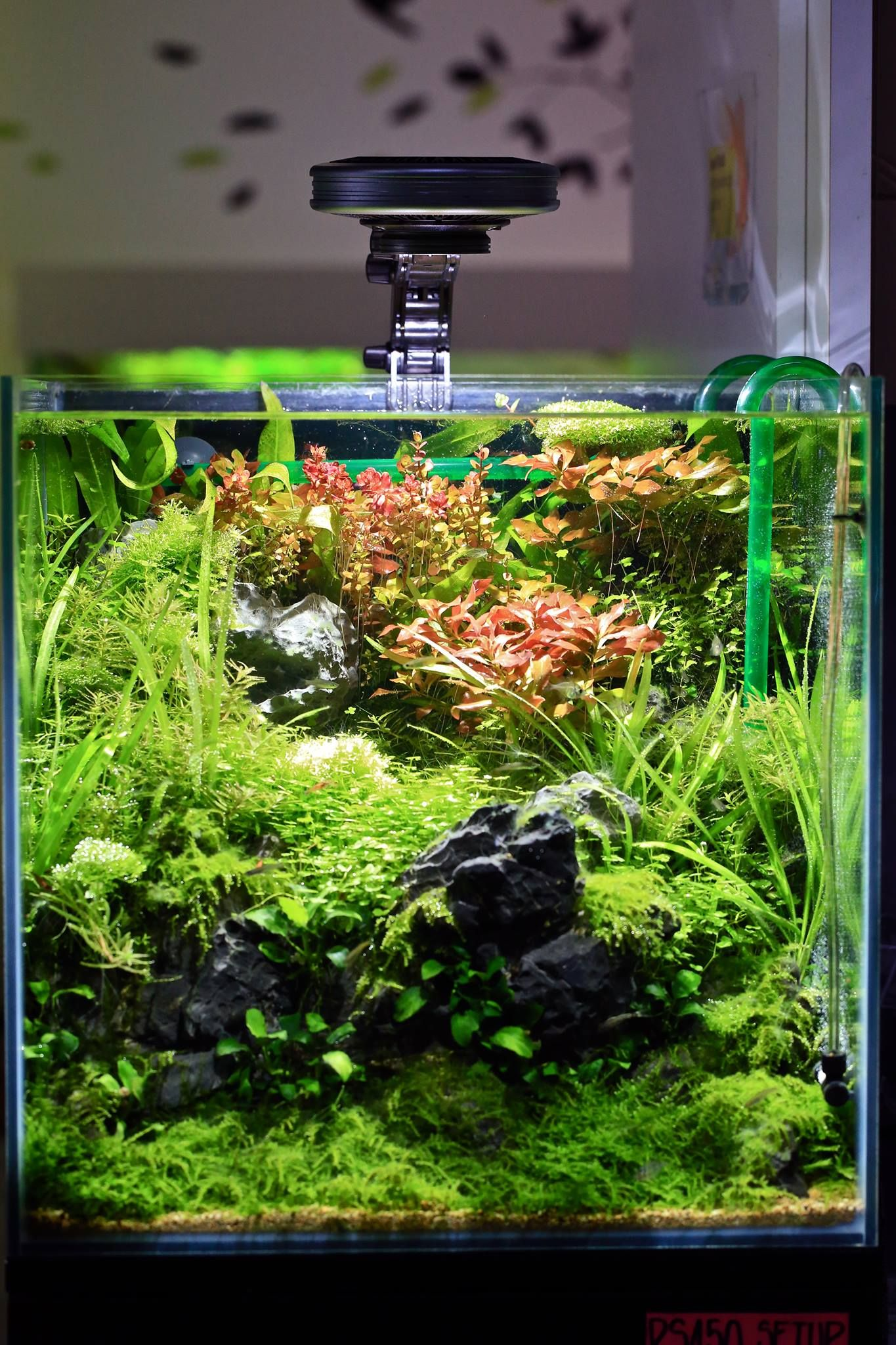 Beautiful | Aquascape, Aquarium