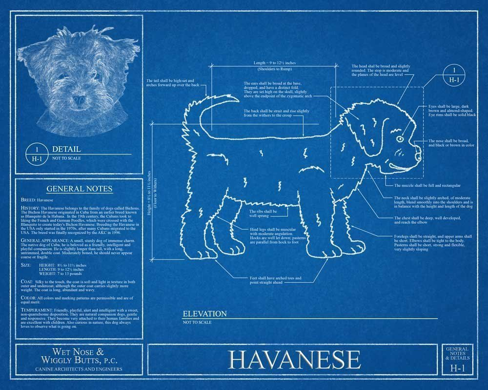Havanese blueprint this havanese blueprint is a wonderful piece of havanese blueprint this havanese blueprint is a wonderful piece of art that will make a malvernweather Image collections