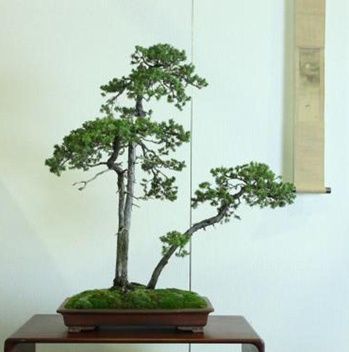 Bonsai Haus pin by sting tung on 植物 花 bonsai