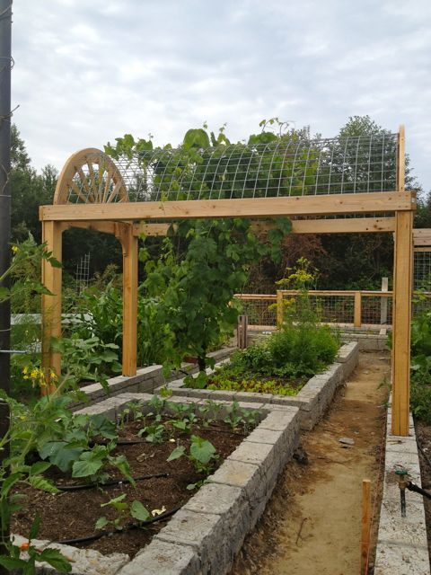 bed arbor   ... able to work around it with the raised beds and also with the arborraised bed arbor   ... able to work around it with the raised beds and also with the arbor