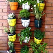piante da terrazzo | giardinaggio | Pinterest
