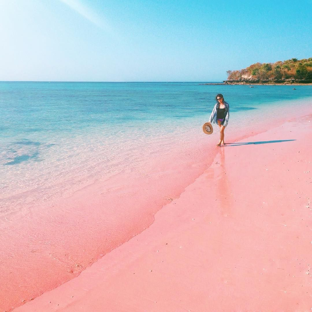 Hasil gambar untuk pink beach lombok