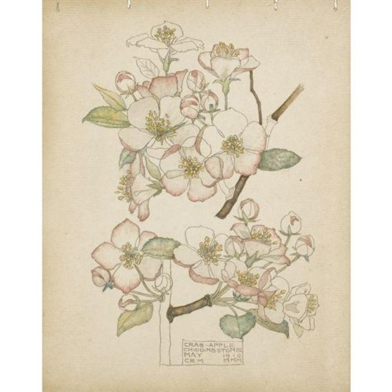 Plant Study ▫ Crab Apple / Chiddingstone by Charles Rennie Mackintosh (CRM) in…