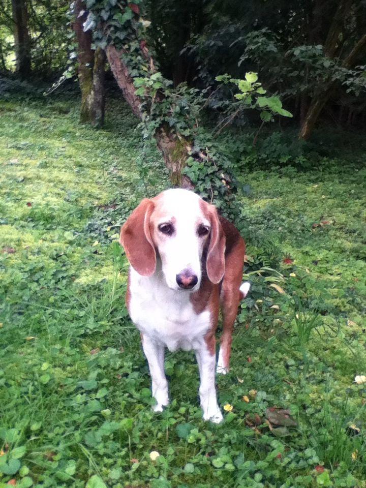 Das ist mein super süßer Hund Branka.