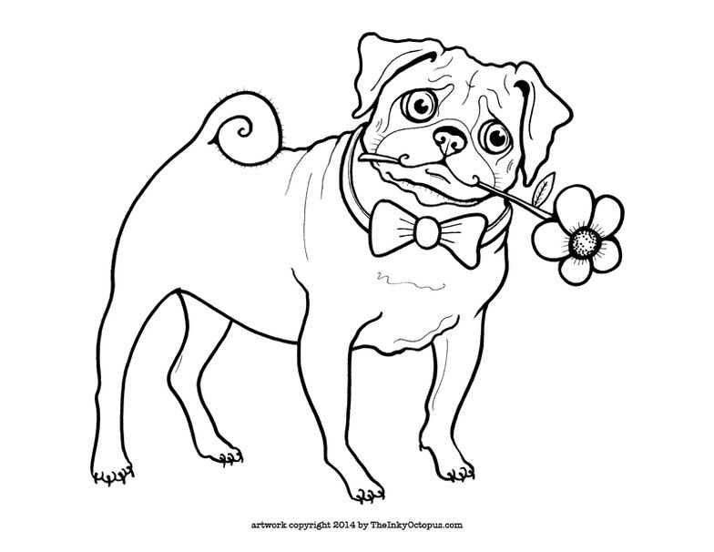 Cute Printable Pug Coloring Page by The Inky Octopus Visit