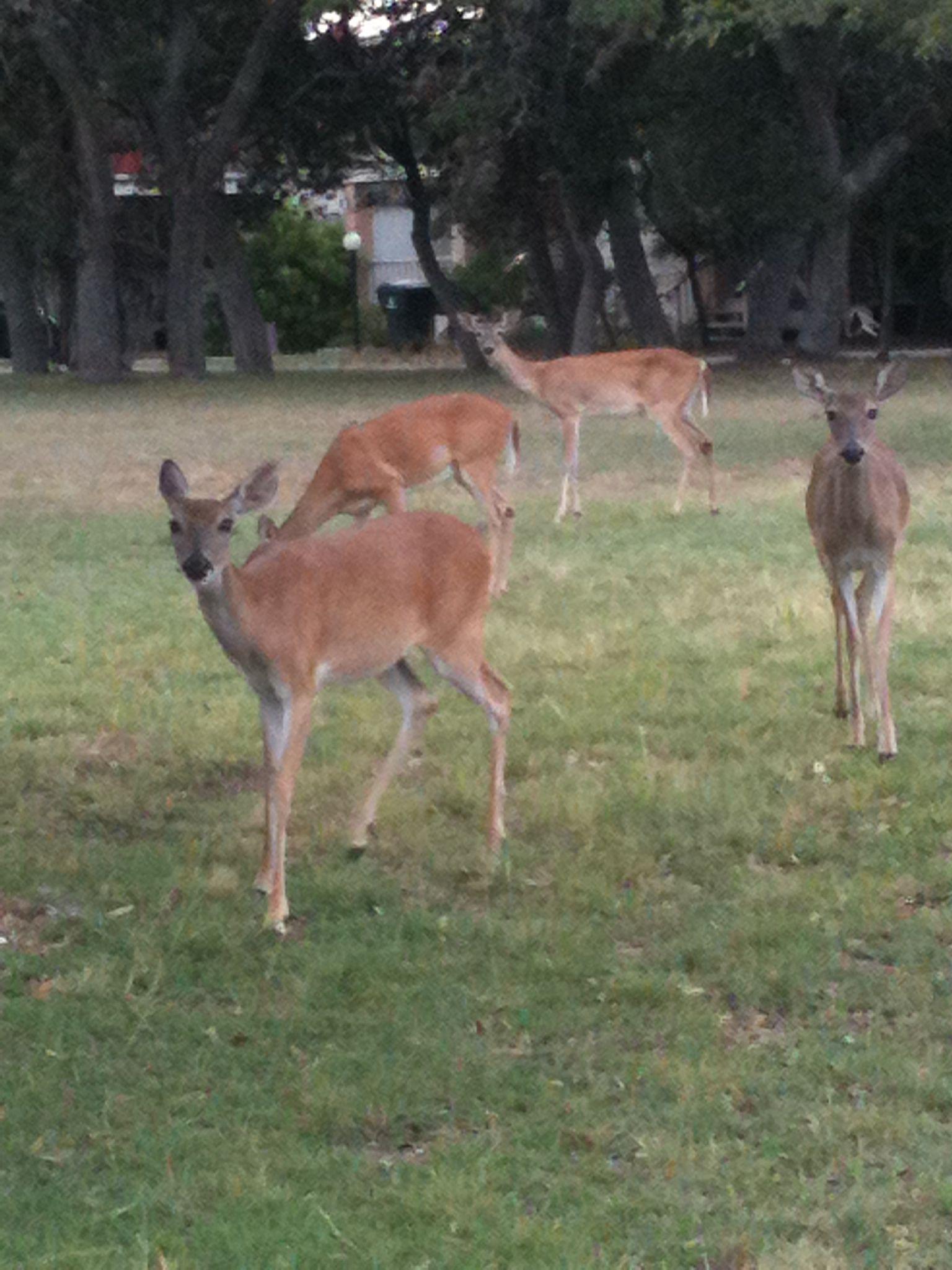 Pin by C Cordova on Favorites Deer, Animals