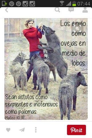 SEÑOR líbrame de los lobos vestidos con piel de oveja, que están en todas partes como león rugiente, buscando presa para devorar!