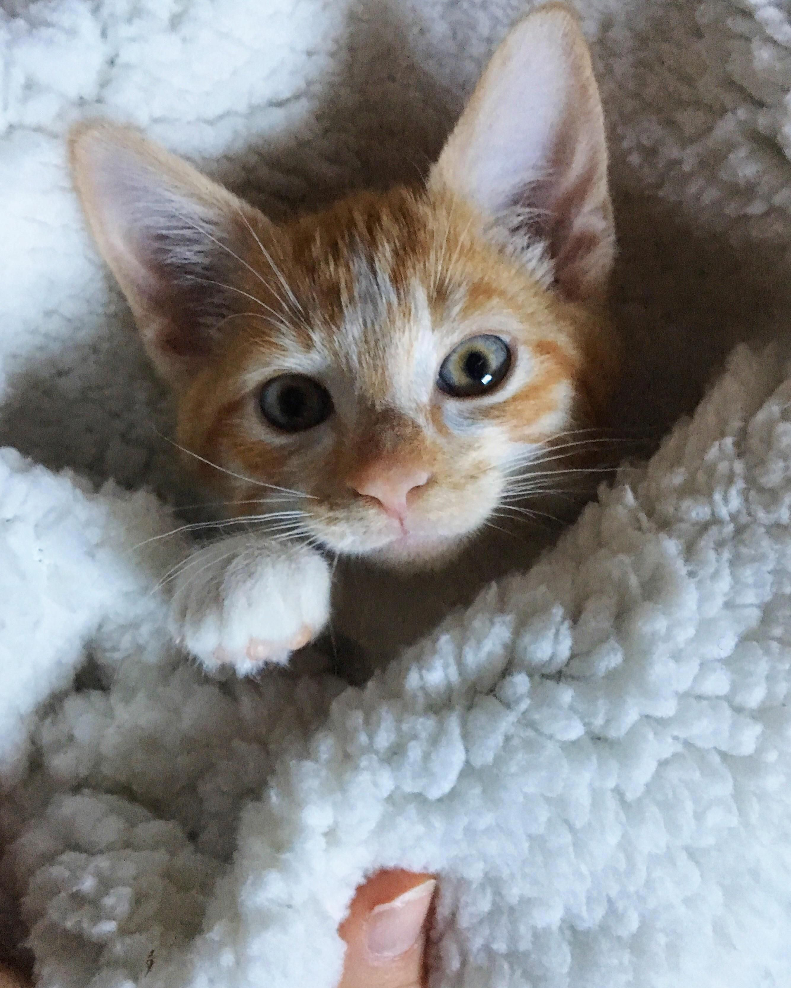 Adorable Kittens Coloring Pages Kittens Cutest Cute Baby Animals Cute Cats And Kittens