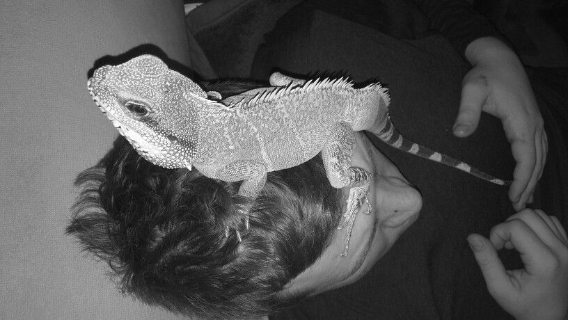 New look:) Chinese water dragon.