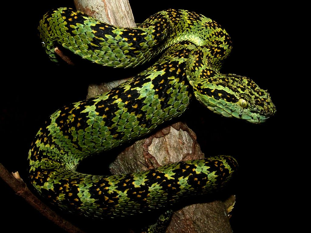 Pin Von Anna Plociennik Auf Reptile Anphibe In 2020 Schlangen Reptilien Tiere
