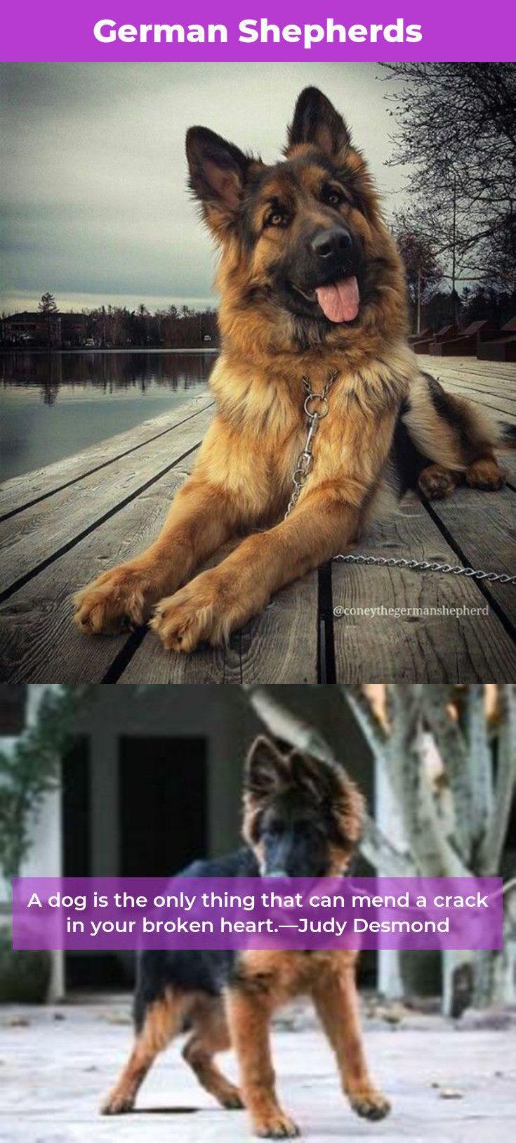 German Shepherd Strong And Loyal German sheperd dogs