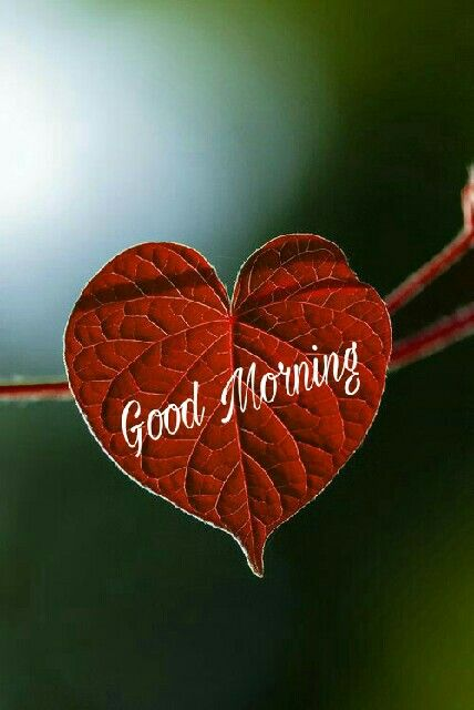 Have A Lovely Day With Images Good Morning Quotes Good Morning Images Good Morning Picture