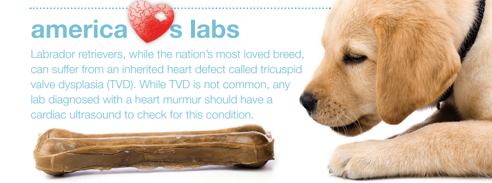 Love Labs Then You Should Definitely Know About His Heart Problem