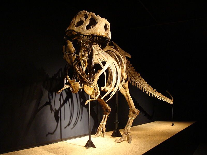 Tarbosaurus (Mongolia) 10-12 m long, 3-4 tall, it weighted 2-6 tons. Seeing a Tarbosaurus with its mouth wide open should be terrifying! The skull was long as a leopard, the whole body was long as 3 cars.