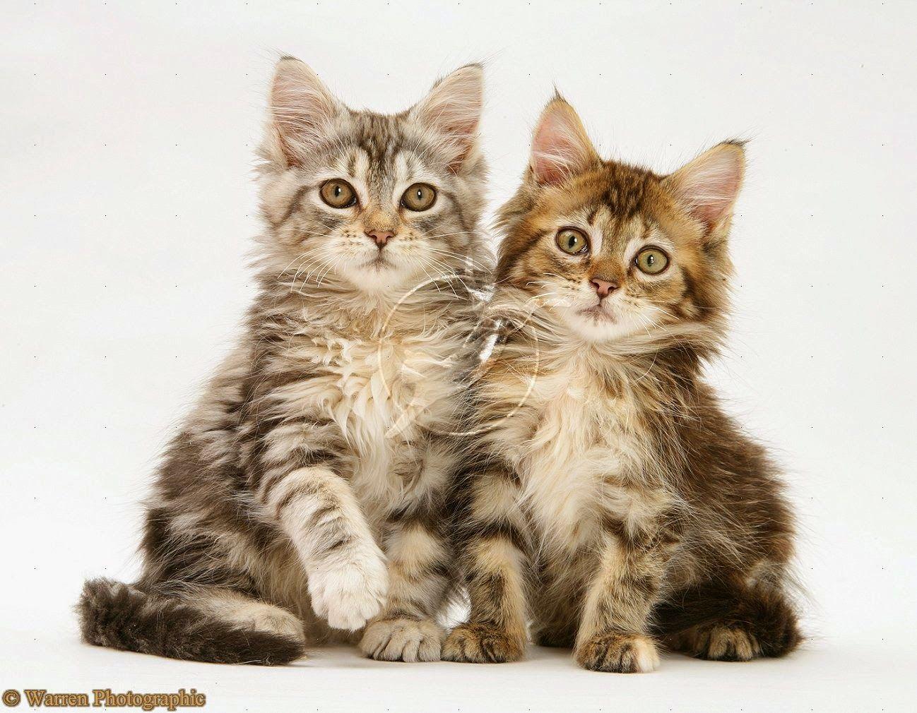 Pin On Kucing Lucu
