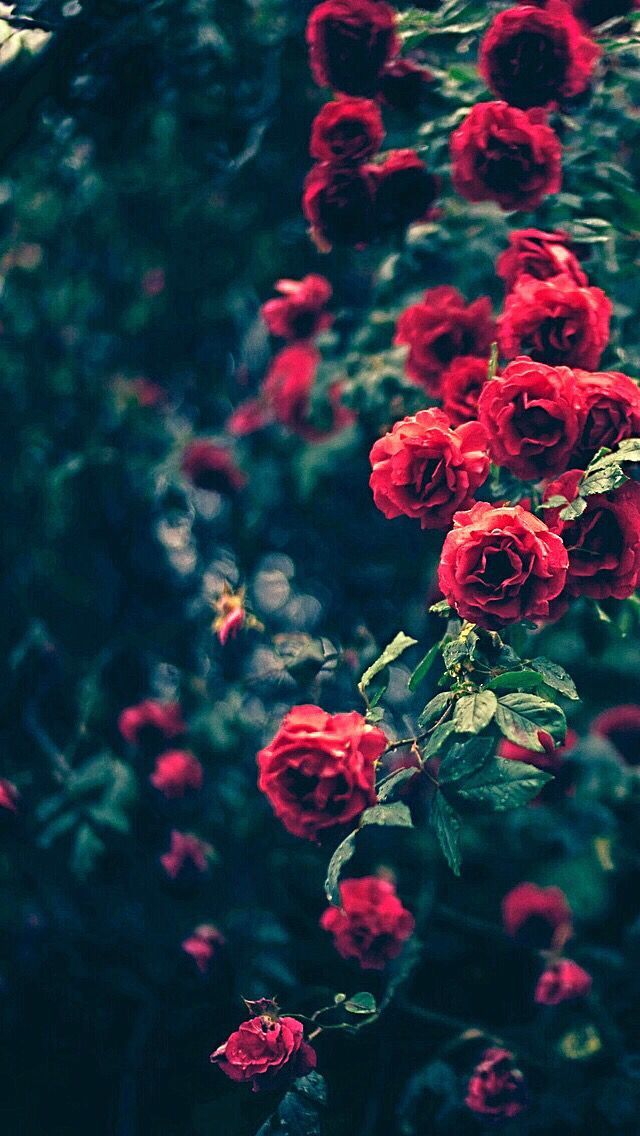 Best Iphone Wallpapers Images On Pinterest Flowers Black Background Beautiful Nature Wallpaper Plant Aesthetic Coolest flower iphone wallpaper