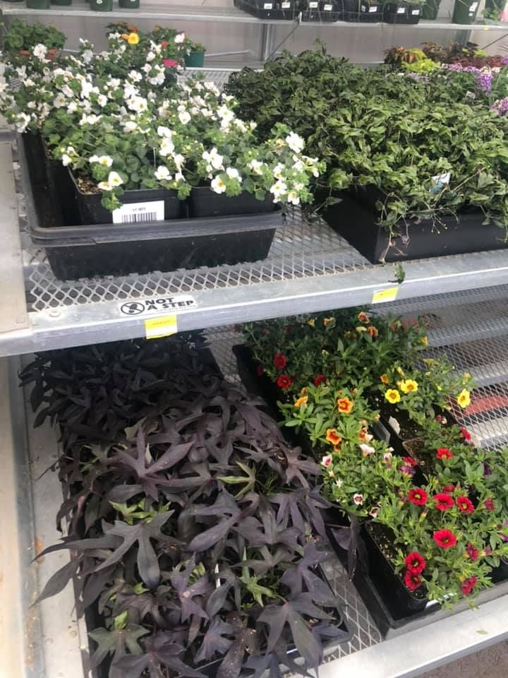 Greenhouse is officially open plants arriving weekly