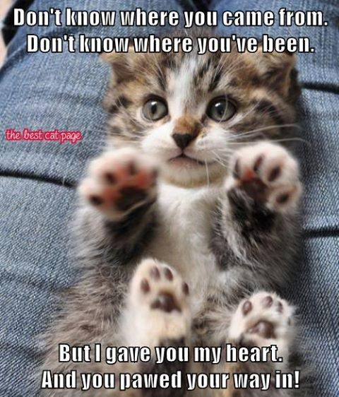 Pin By Kivera Sf On Funny Cats Kittens Cutest Cute Cats Cute