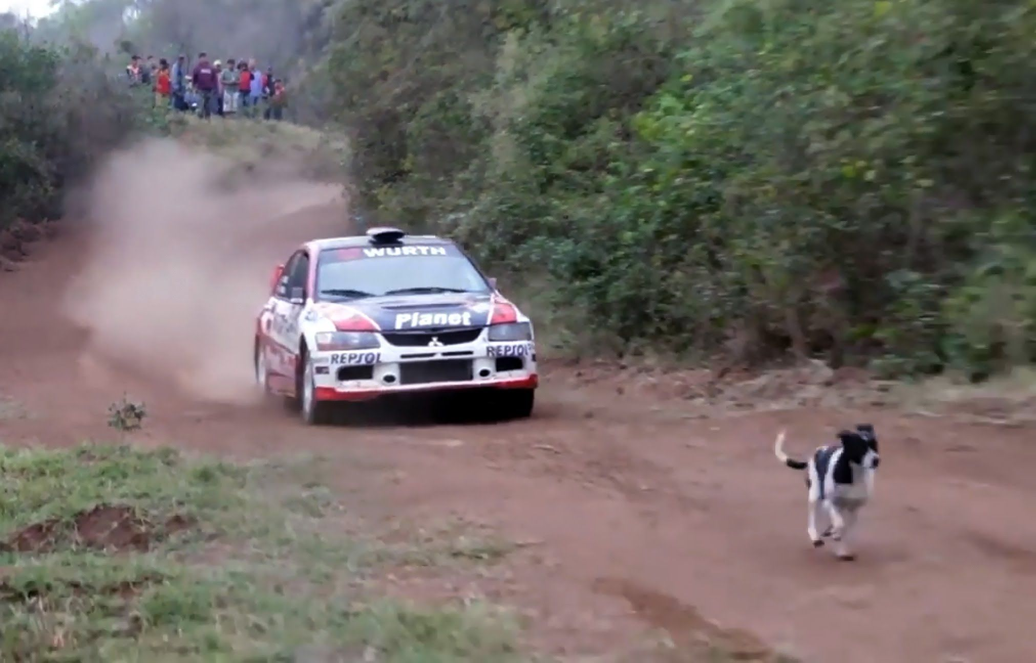 Rally Car Jumps Over Dog (with slow motion)   Articles & Videos ...