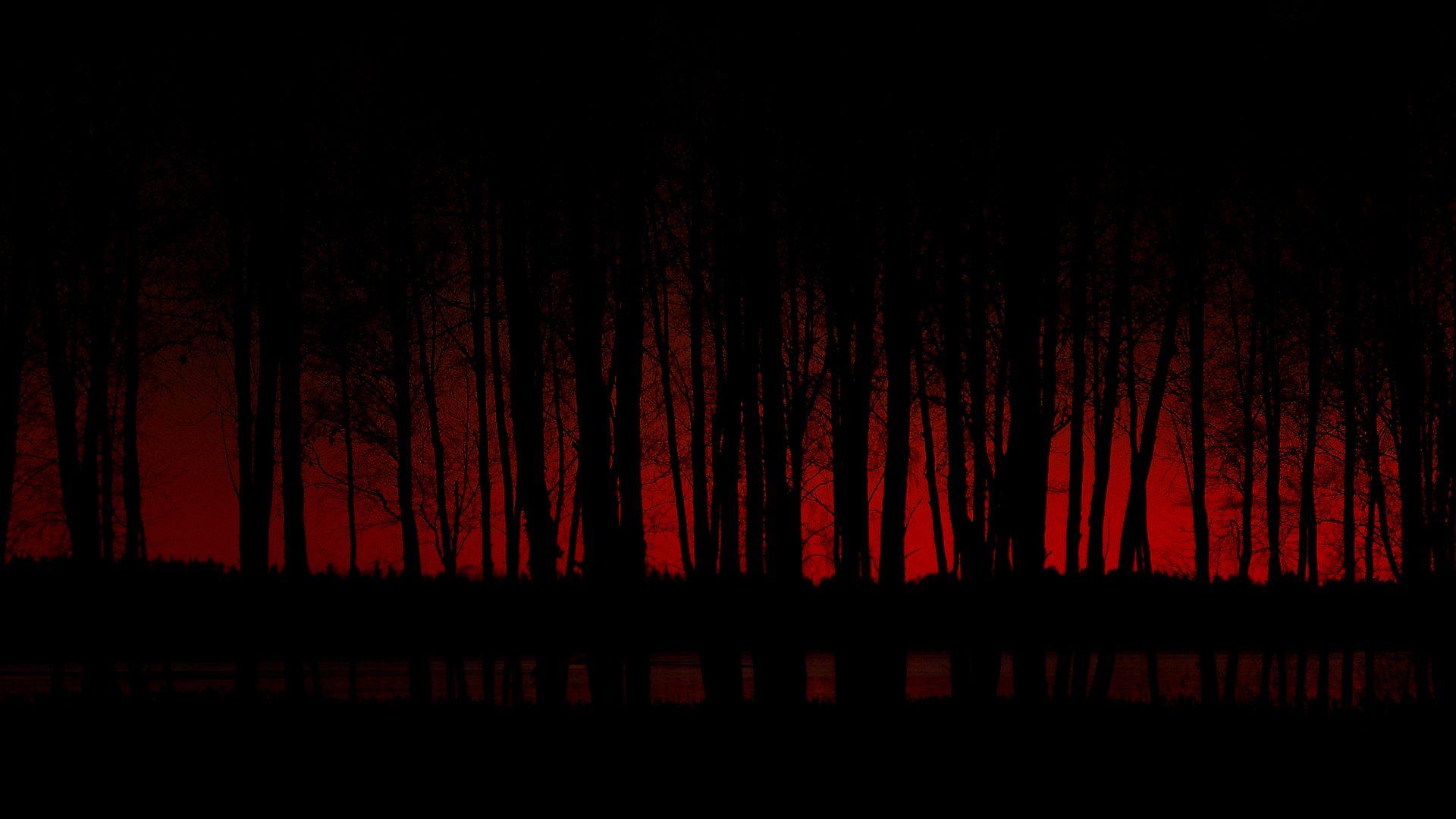 Red Sky Forest Dark Wallpaper Forest Wallpaper Dark Black Wallpaper