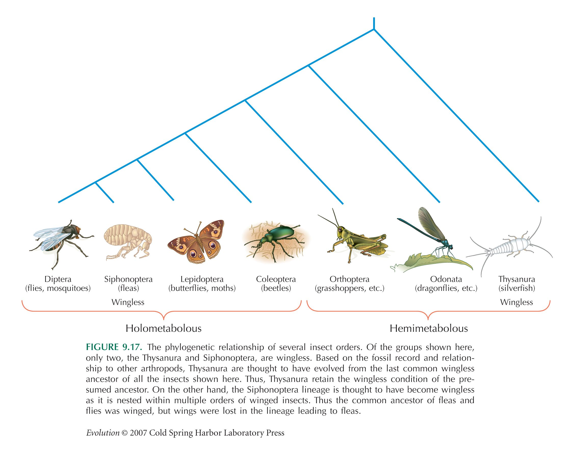 Pin By Halley Minser On Insects