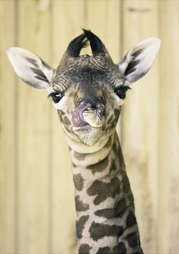 Cutest In The Animal Kingdom Cute Animals With Funny Captions Animals Cute Baby Animals