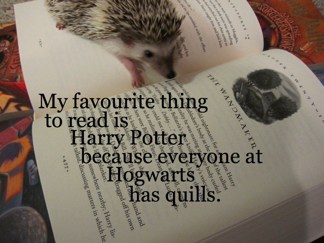 Ollie on Hogwarts