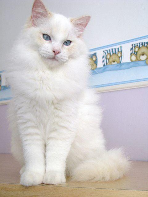:D so handsome beau  matout  tout blanc,,,,