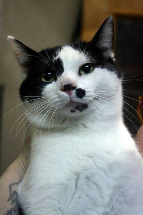 Marble has been at the Raleigh County, WV animal shelter since December 2013. He is about a year old, neutered male, black and white sweetheart. Please re-pin and share, it's time for a real home!!!  Humane Society of Raleigh County  325 Grey Flats Road  Beckley, WV 25801 304-253-8921  www.hsrcwv.org