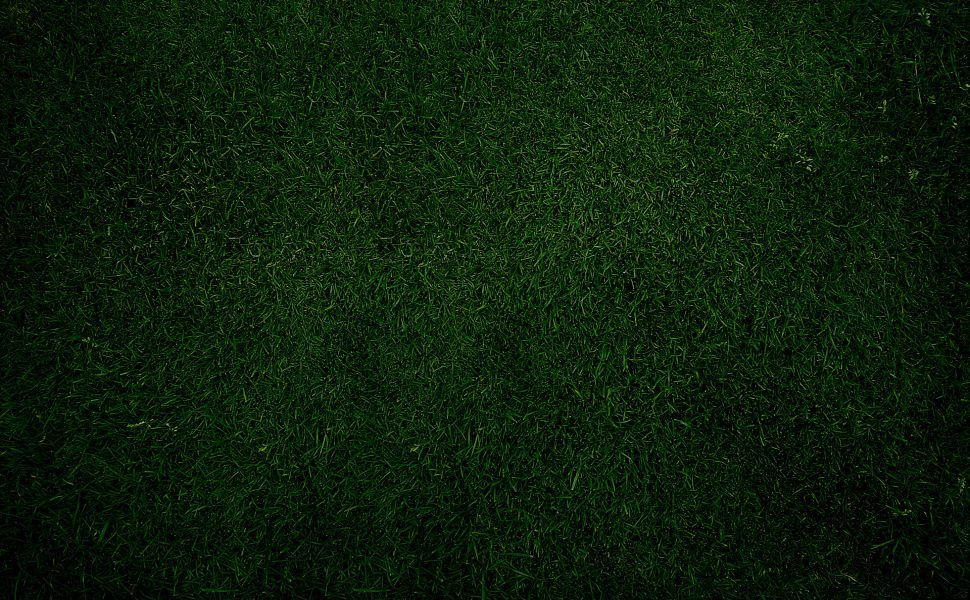 Wallcoo Cute Wallpaper Plain Dark Green Grass Hd Wallpaper Green Wallpaper