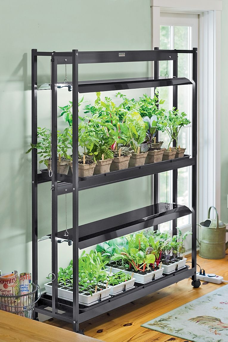 seed starting in the basement Gardening/Outdoor Garden