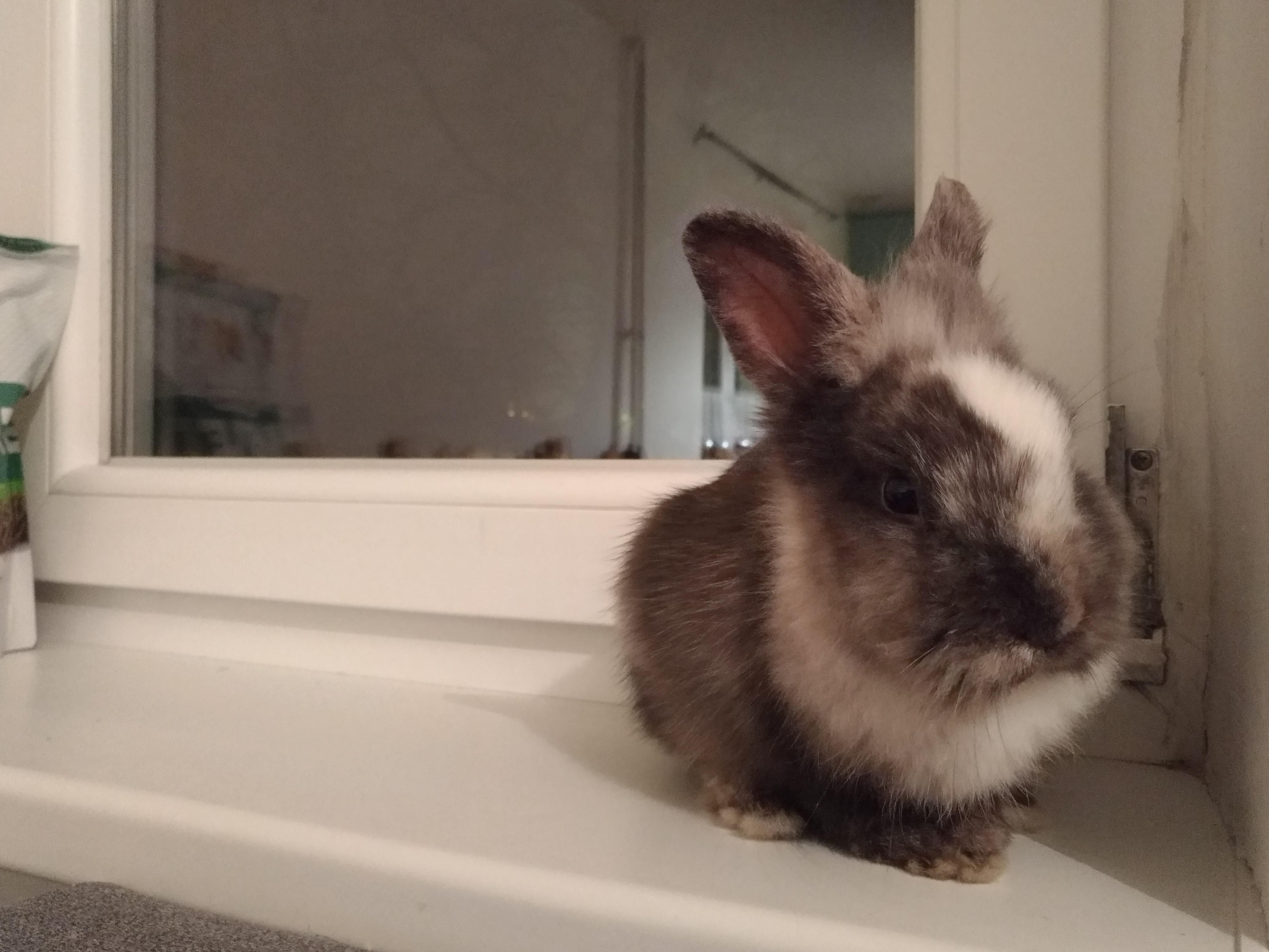 Things You Need To Know Before Buying A Rabbit Rabbit Care Rabbit Playpen Pet Rabbit