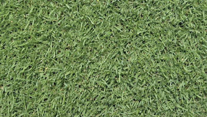 Plant And Care For Zoysia Grass Zoysia Is A Great Choice For Warmer Climates Zoysia Grass Is A So Zoysia Grass Drought Tolerant Grass Grass Texture Seamless
