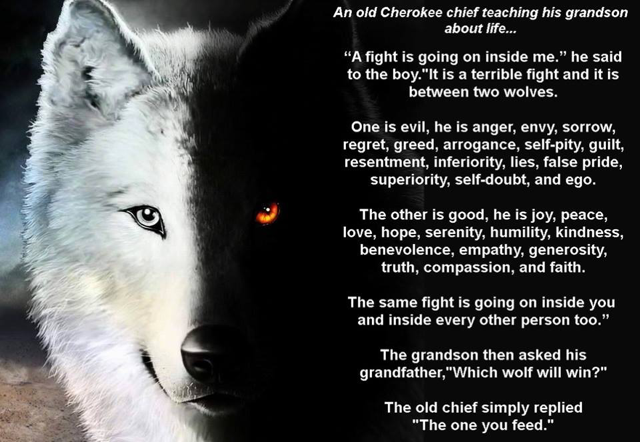 Image result for good wolf vs bad wolf | Wolf quotes, American quotes, Two wolves